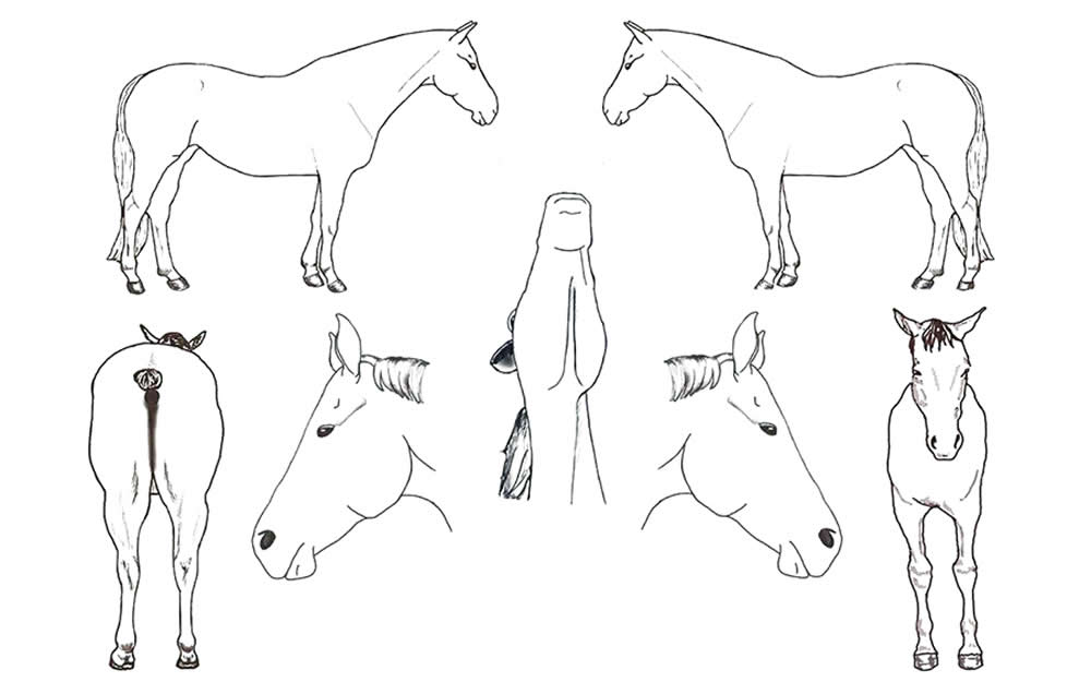 Body Map horses