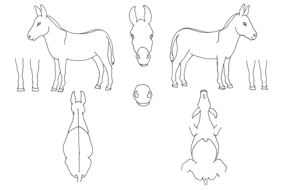 Body Map Donkey