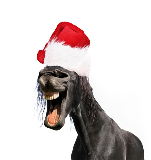 horse with christmas hat