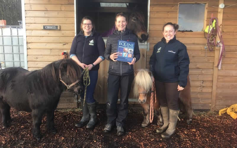 New Forest Equine Vets